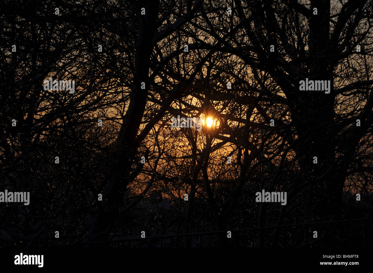 Orange winter sun shines through the trees - Stock Image
