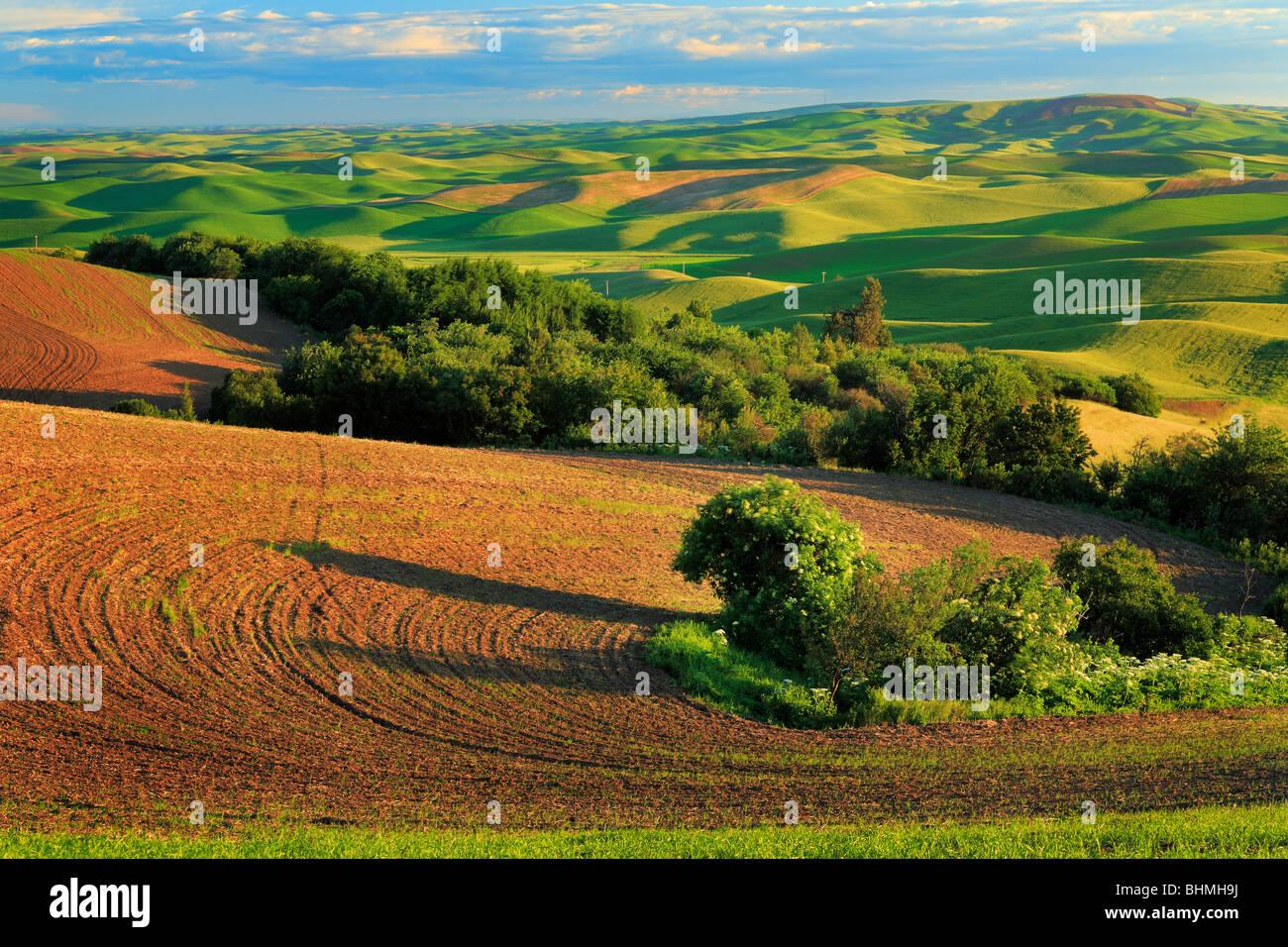 Farm fields from Steptoe Butte in the Palouse region of eastern Washington state - Stock Image