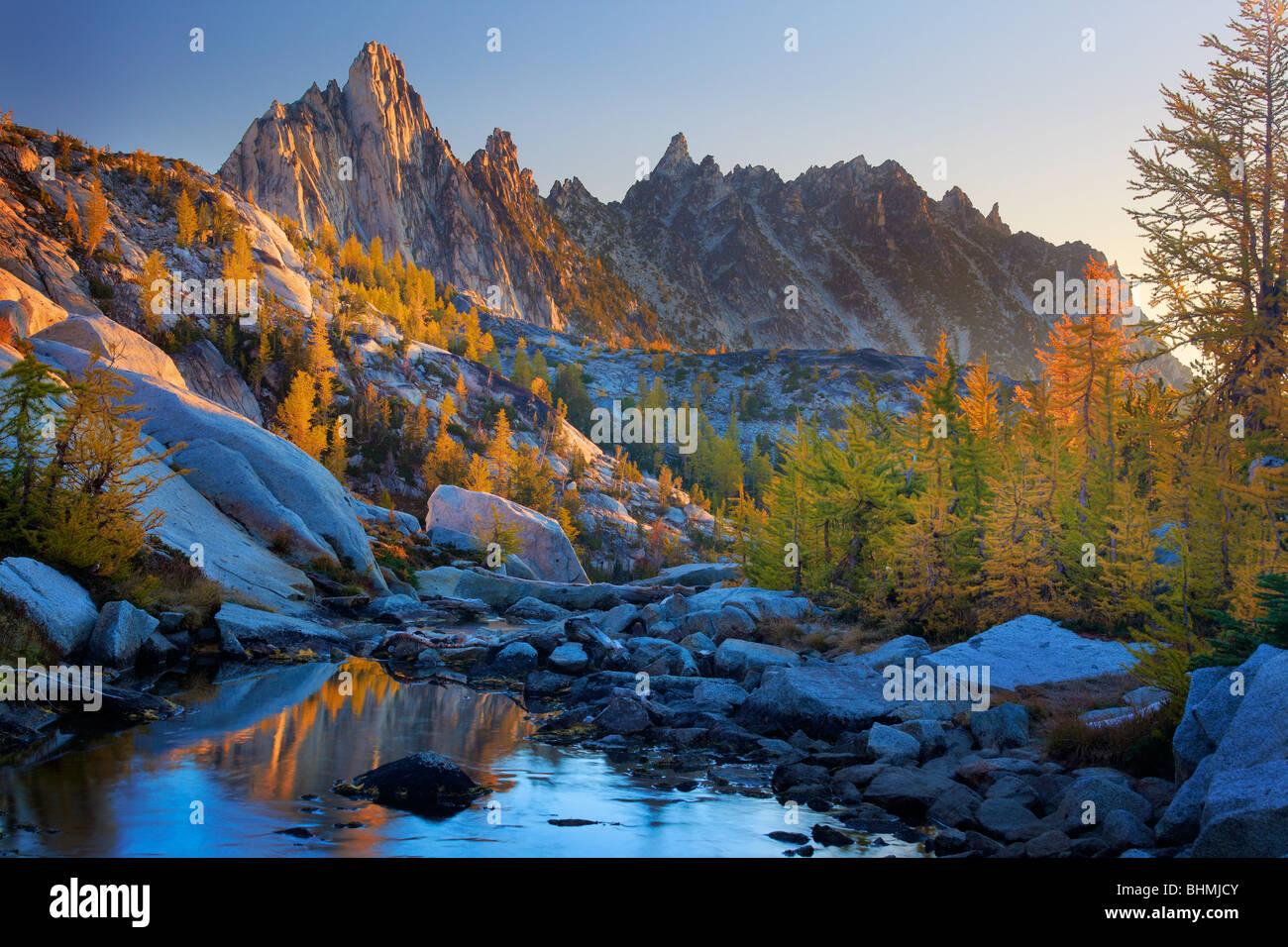 Larch trees at Enchantment Lakes - Stock Image