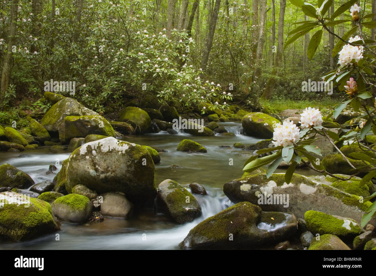 Rushing mountain stream, Great Smoky Mountains National Park, North Carolina - Stock Image