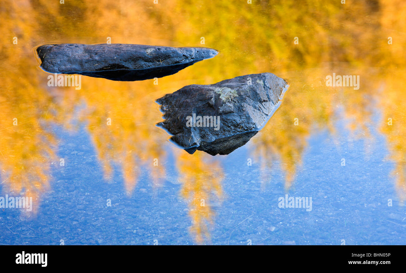 Rocks and golden Larch pine tree reflections in Blea Tarn, Lake District National Park, Cumbria, England, UK. - Stock Image