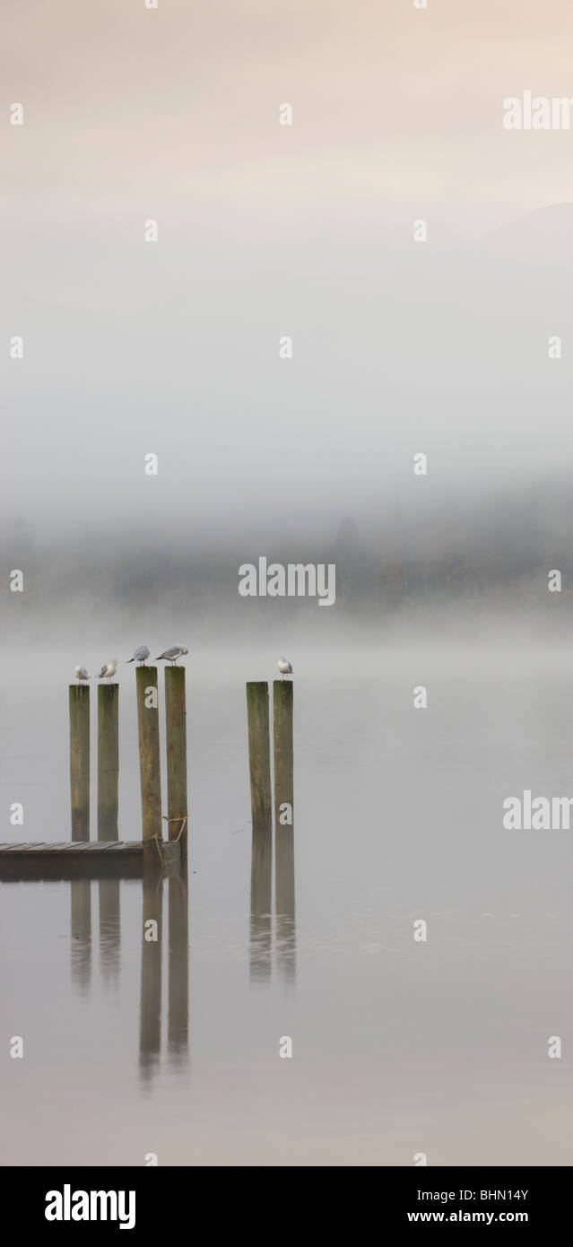 Gulls perched on jetty posts on a misty morning, Derwent Water, Keswick, Lake District National Park, Cumbria, England, - Stock Image