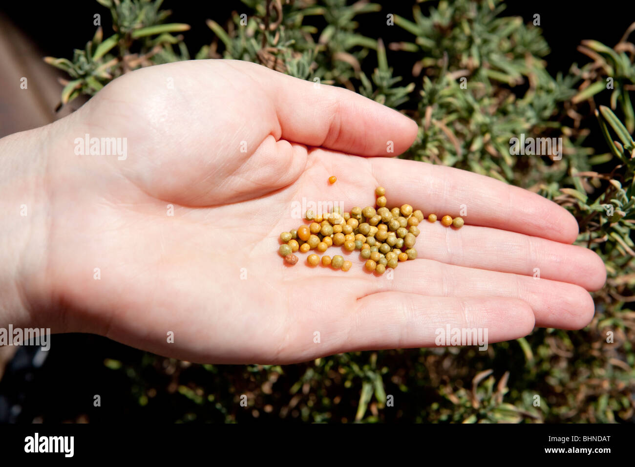 Slow release fertilizer - Stock Image