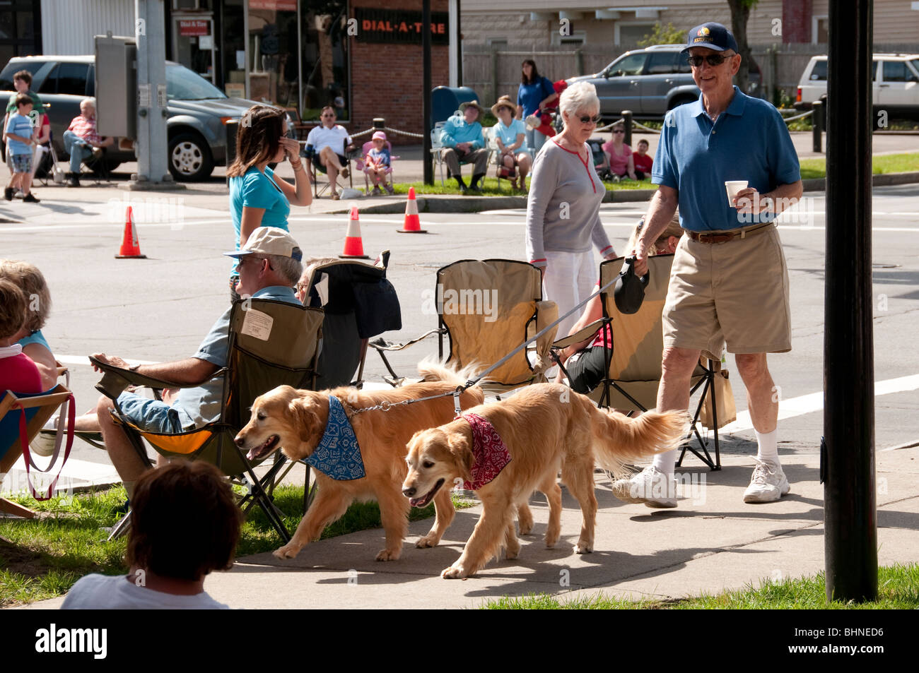 Man walking two Golden Retrievers, 4th of July Parade. - Stock Image