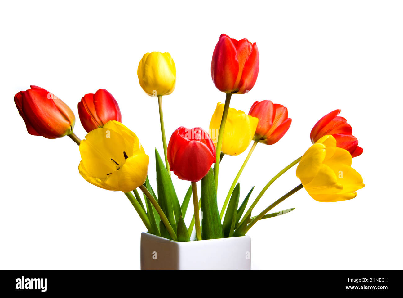 a bunch of Tulips flowers - Stock Image