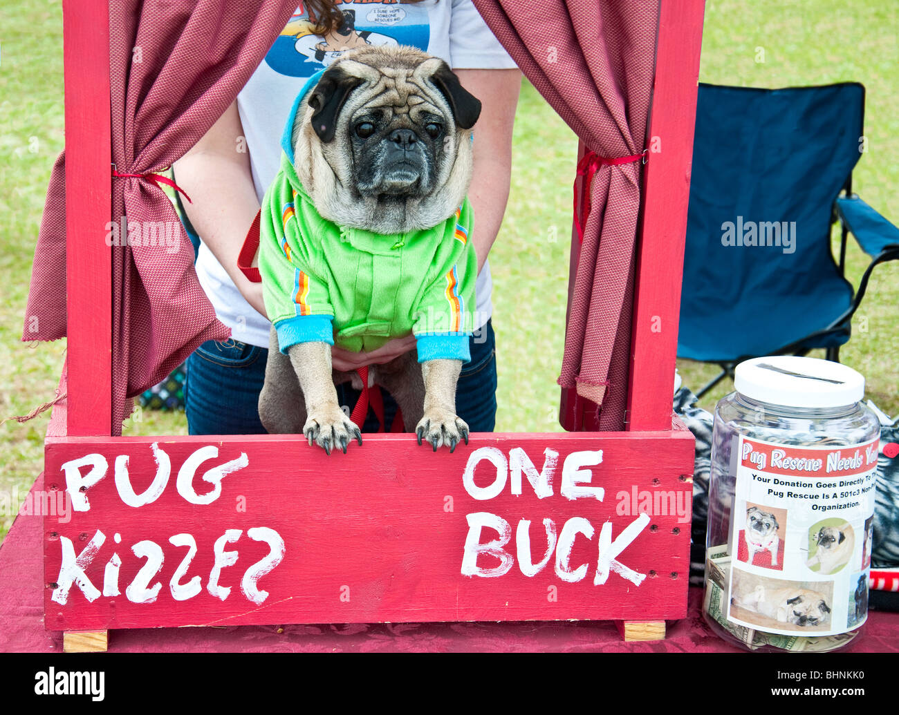 Dougie the Pug sells kisses at a booth at the 2010 Lakewood Ranch Pug Parade, to raise money for Pug Rescue. - Stock Image
