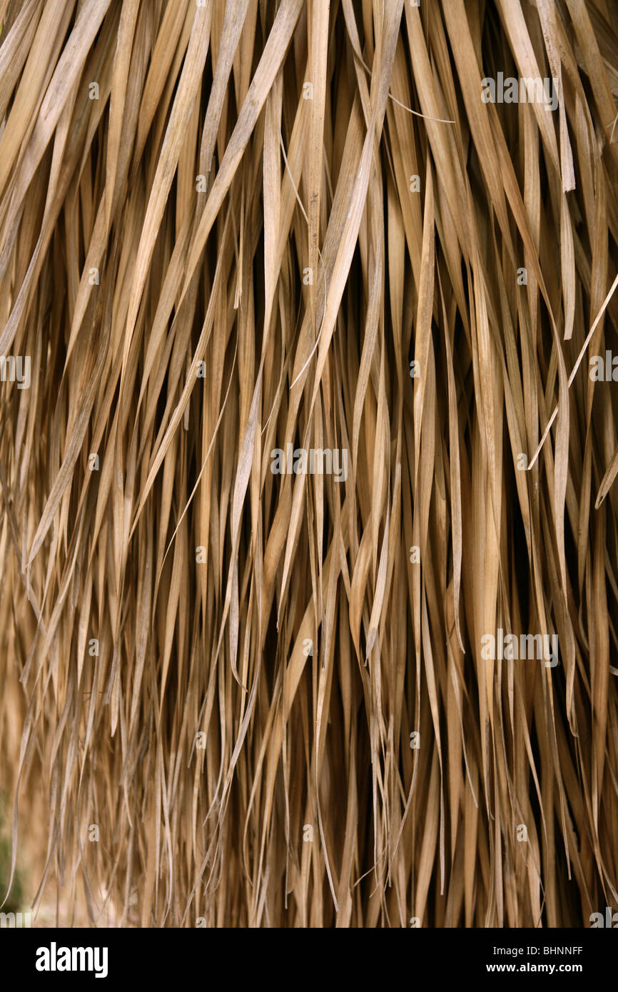 Dried Palm Tree Leaves Used As A Tropical House Roof System Stock Photo 28137411 Alamy