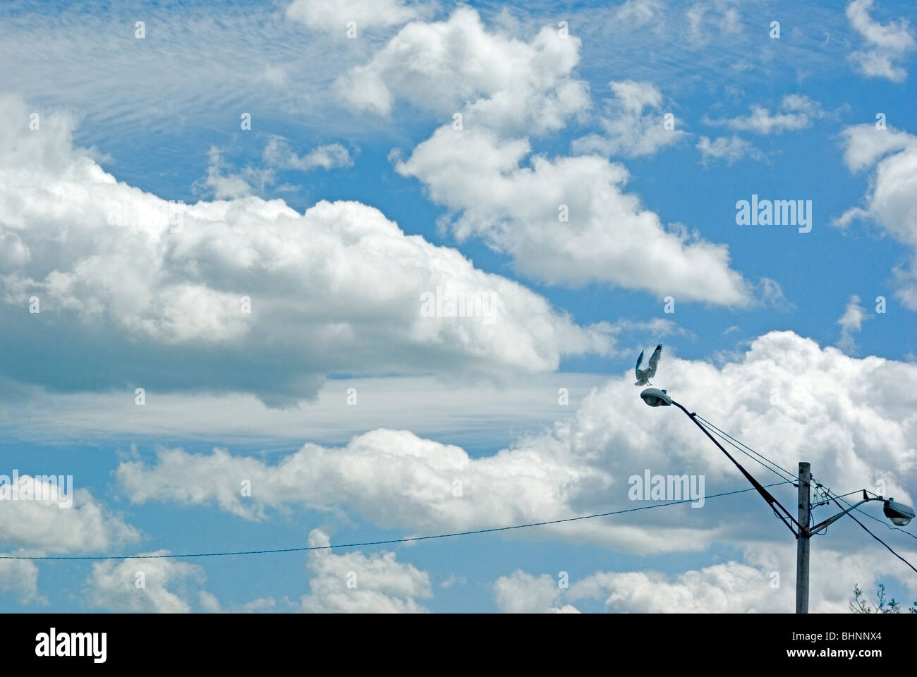 urban skyscape, gull landing on street lamp - Stock Image