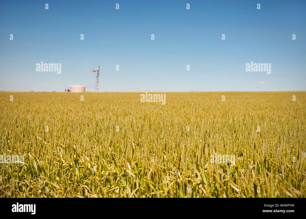 windmill in fields of wheat in the countryside at burra south australia - Stock Image