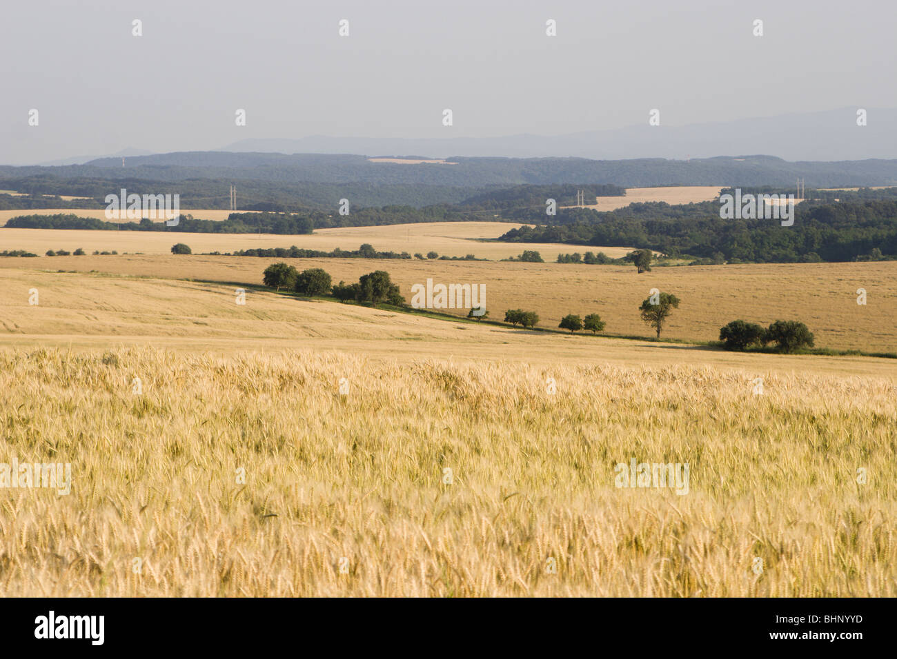 landscape for the harvest - Stock Image