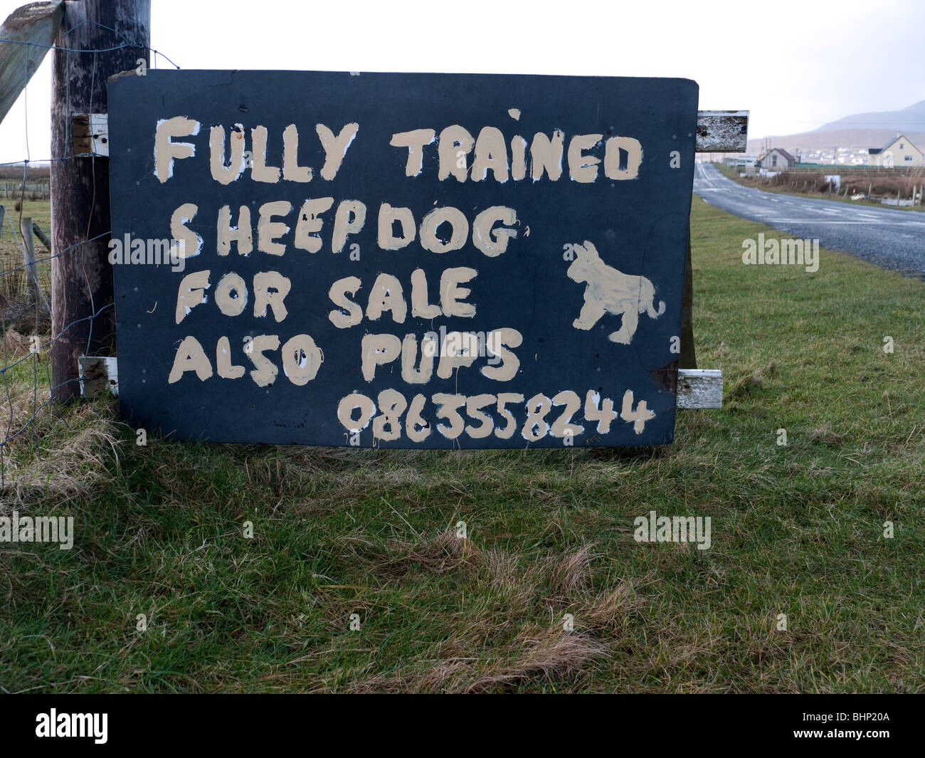Sign advertising trained sheepdogs for sale in County Mayo Ireland - Stock Image