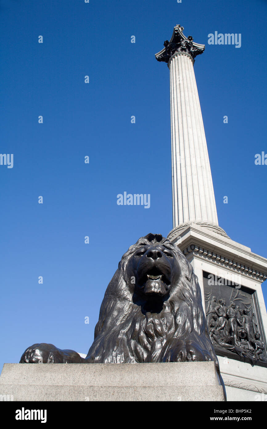London - admiral Nelson column and lion - Trafalgar square - Stock Image