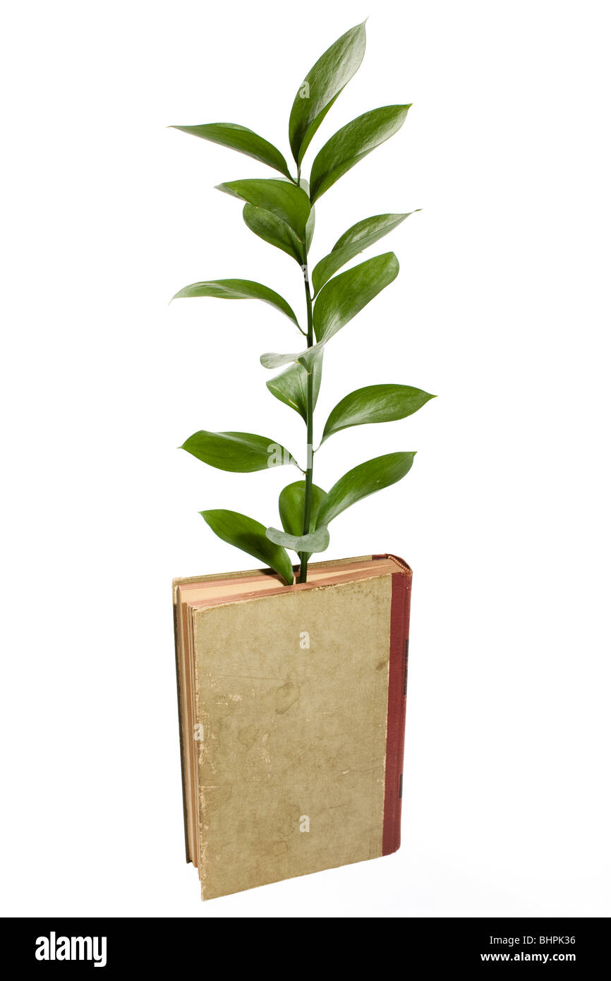 Conceptual image illustrating the growth of knowledge with a plant growing out of an old book. - Stock Image