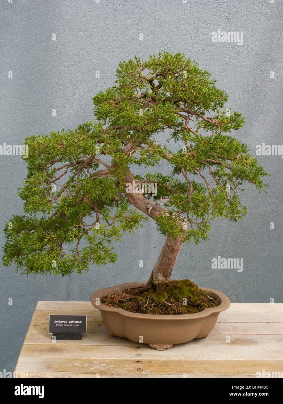 Bonsai Tree At Brooklyn Botanic Garden Stock Photo Alamy