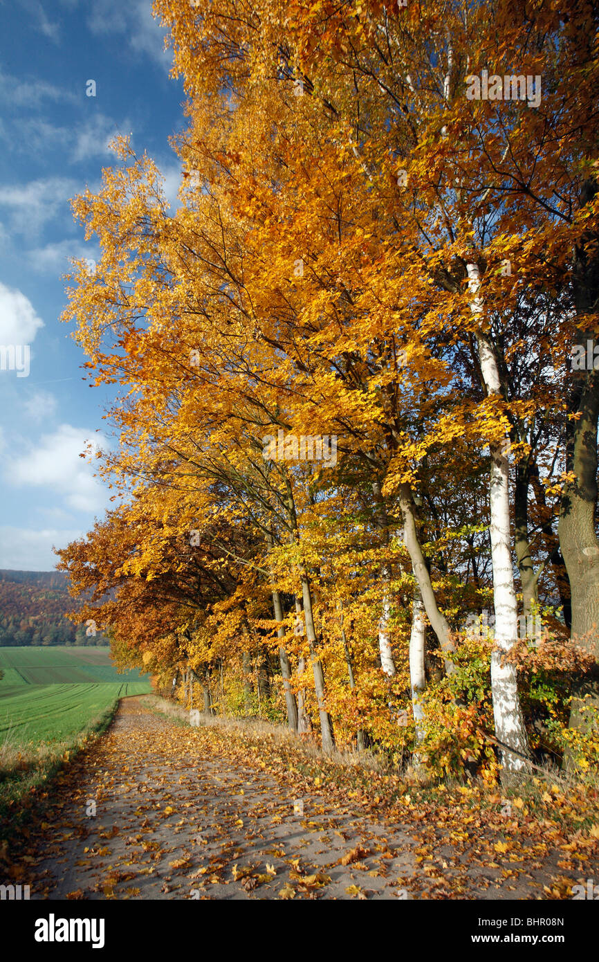 Mature Hedge, trees showing autumn colour, beside cycle path, Germany - Stock Image