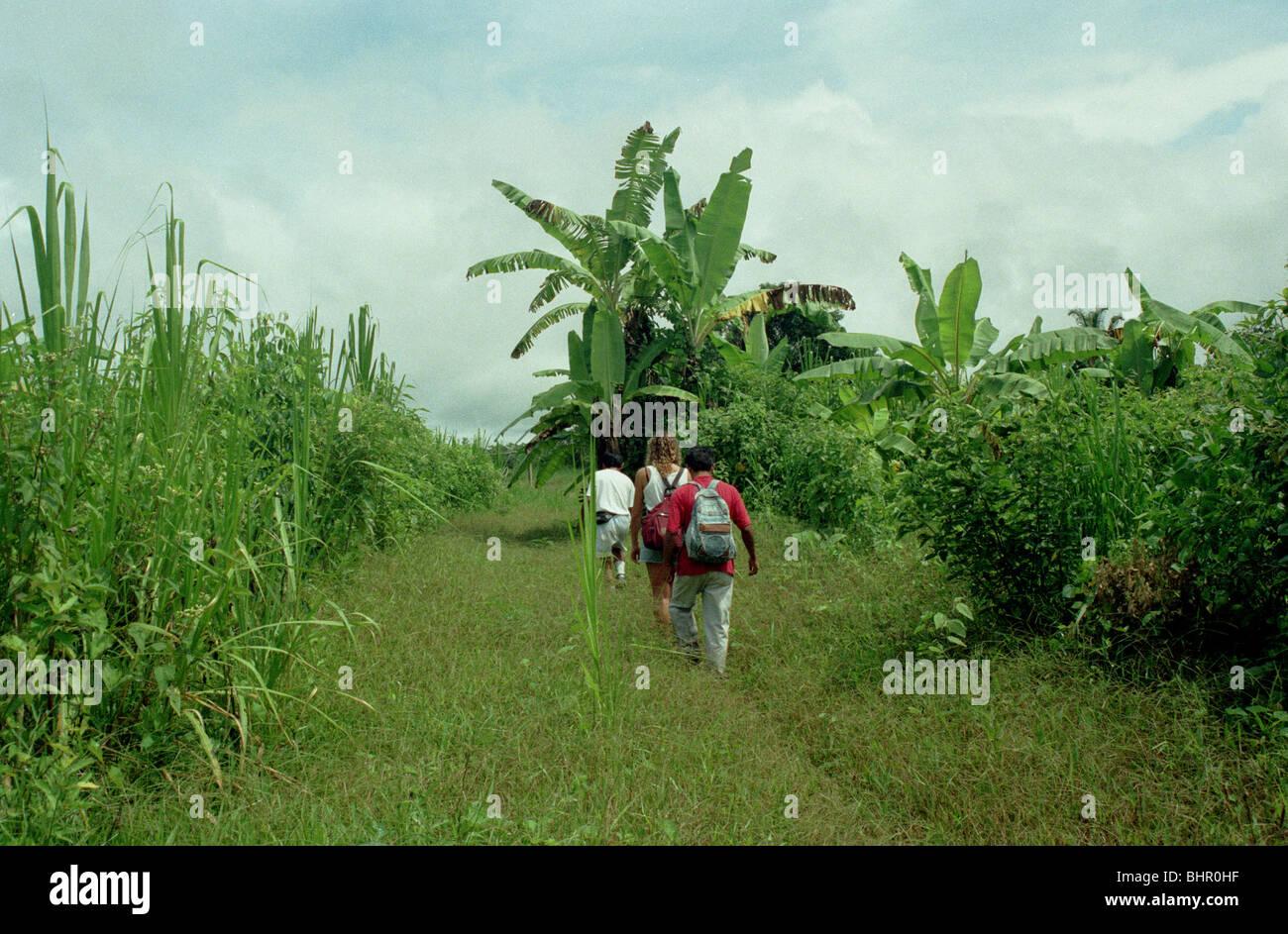 tourist walking through the Peruvian Amazon - Stock Image
