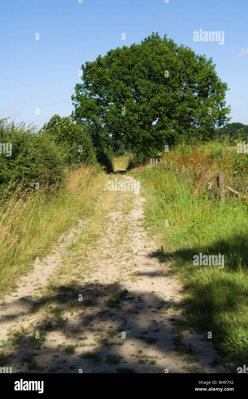 Country lane in the Garden of England during the summer - Stock Image