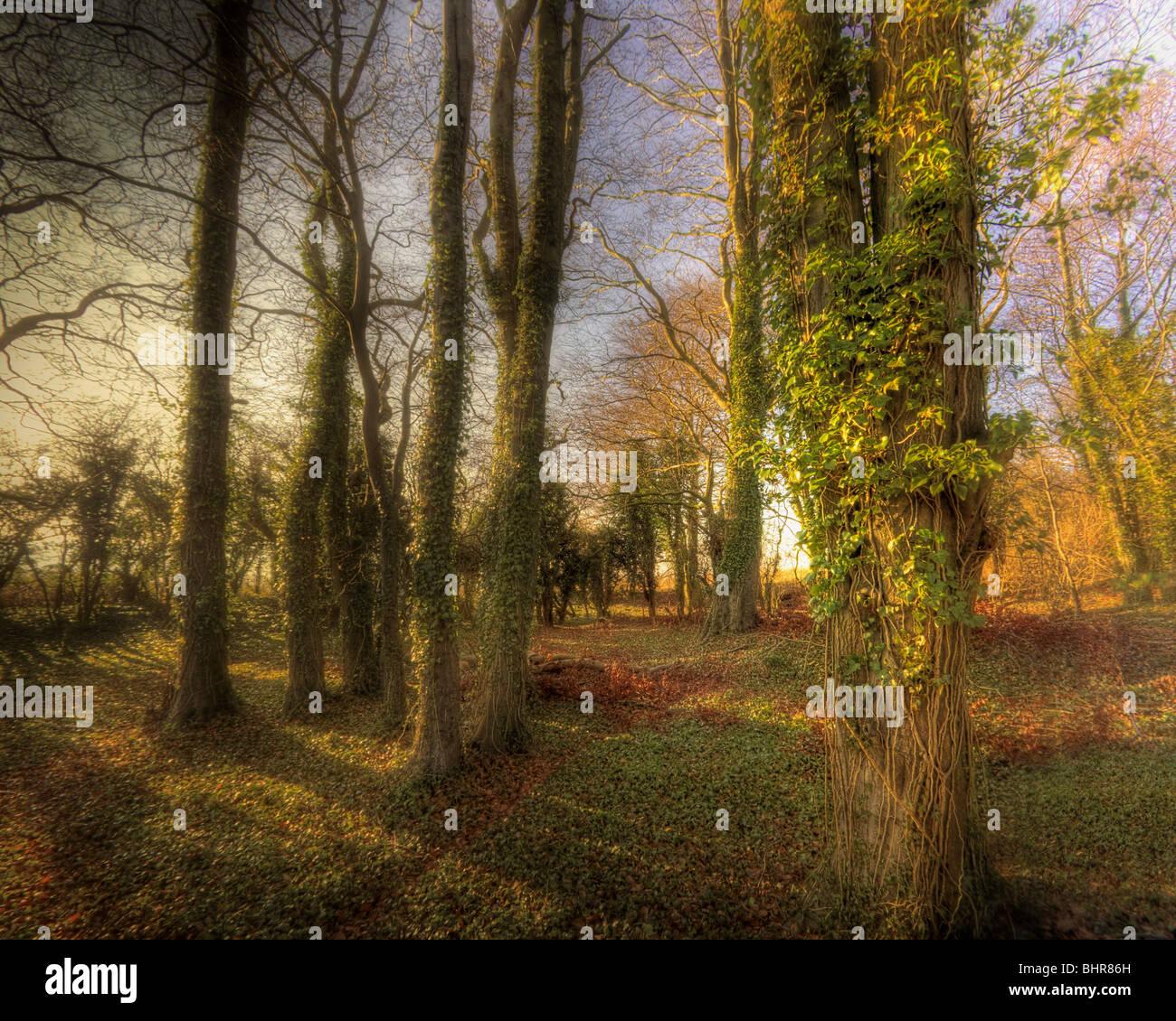 PHOTO ART: Magic Woods (United Kingdom) - Stock Image