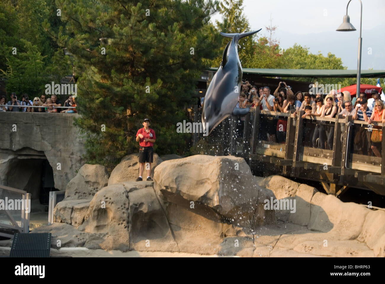 Dolphin show at Vancouver Aquarium in British Columbia Canada. - Stock Image