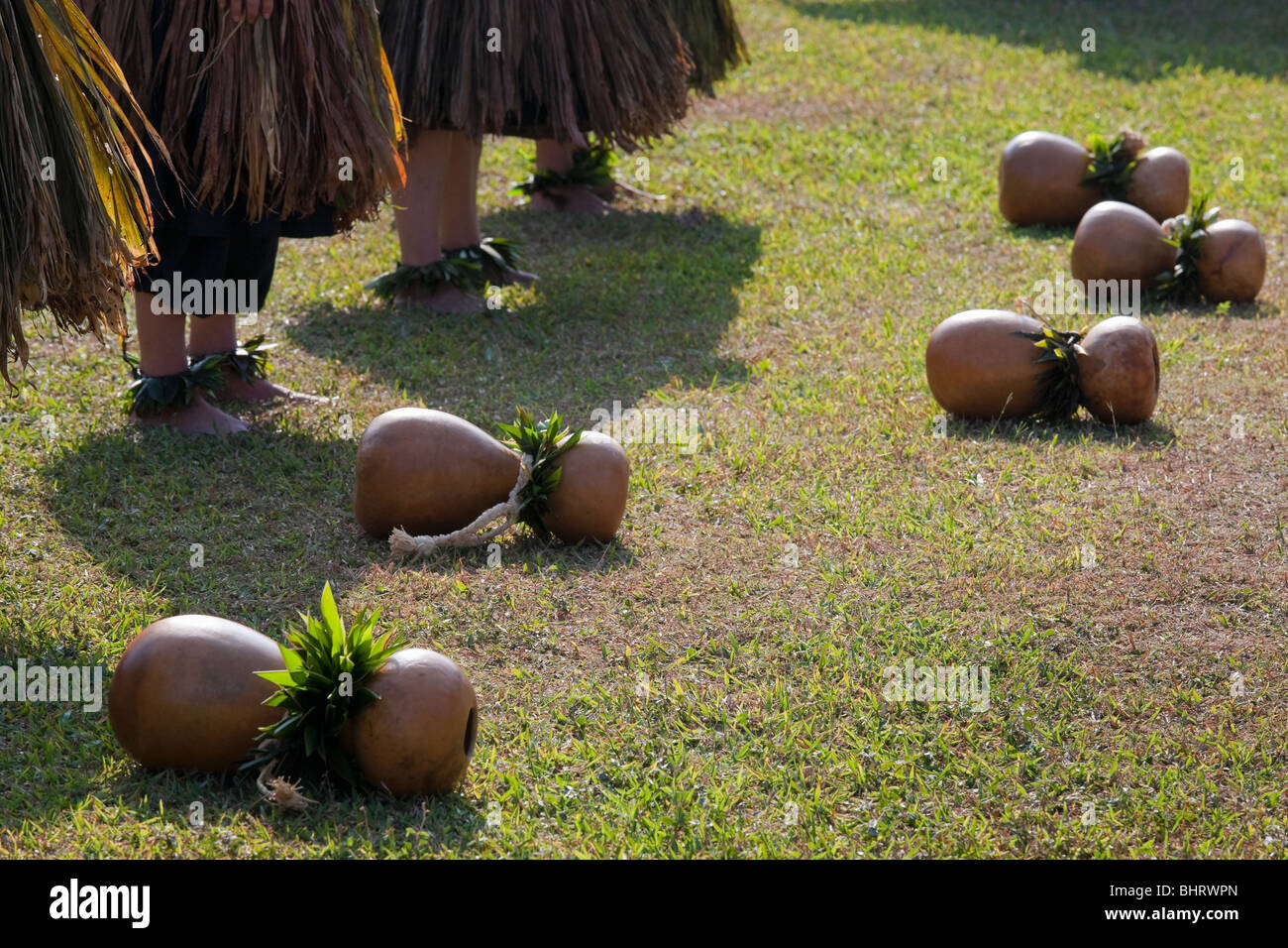 Ti leaf skirted hula dancers in Hawaii with ipu hekes resting in front of them before performance. - Stock Image