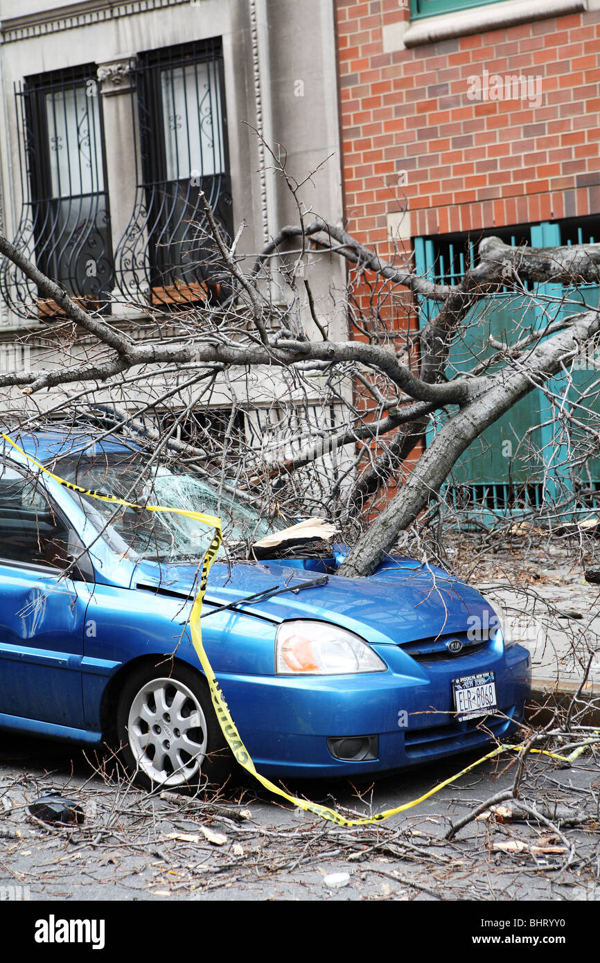 Parked Car crushed by wind damaged tree - Stock Image