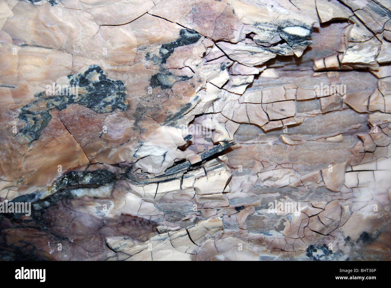 Fossilised Wood Pink Colour - Stock Image