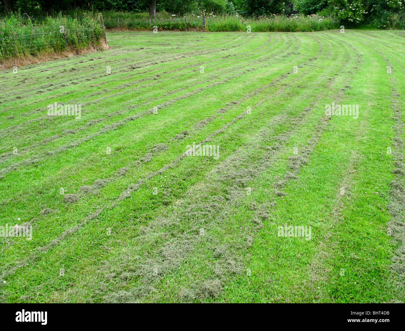 Cut grass lawn - Stock Image