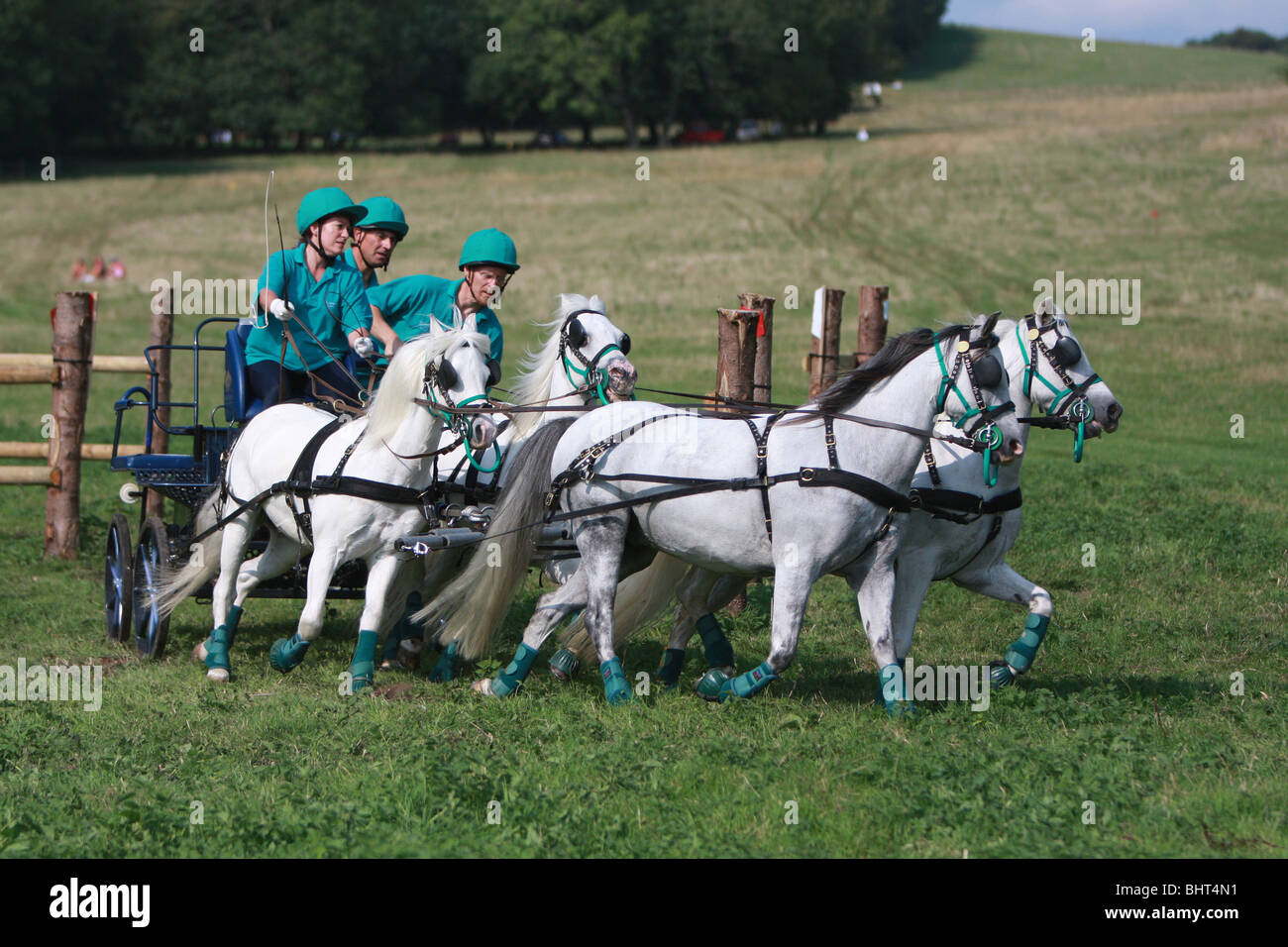 Pony Harness Club trial competition at Goodwood, West Sussex, England, UK - Stock Image