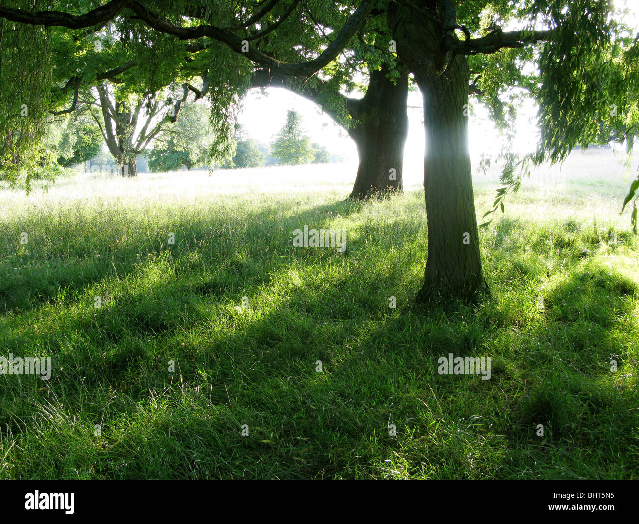 Sun shining through trees in summertime - Stock Image