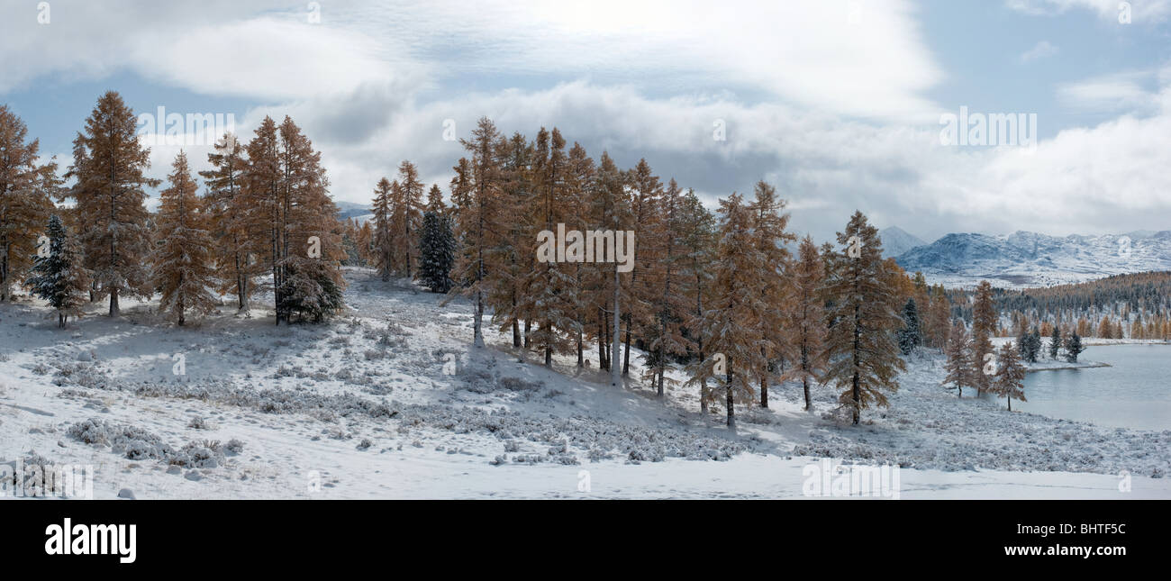 Panoramic view of winter forest and lake - Stock Image