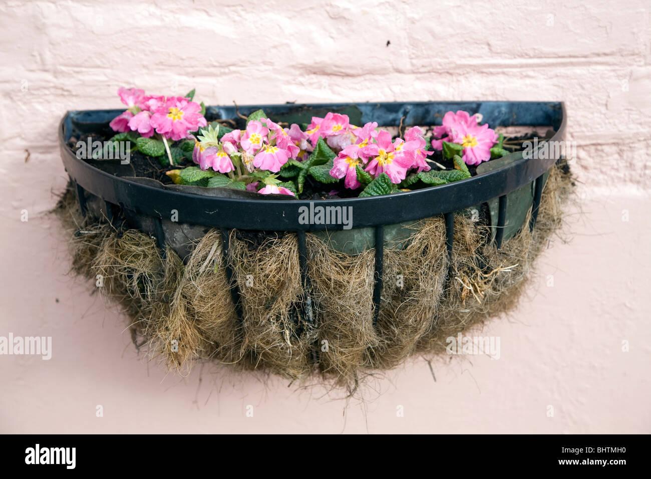 Hanging basket flower box pink wall - Stock Image