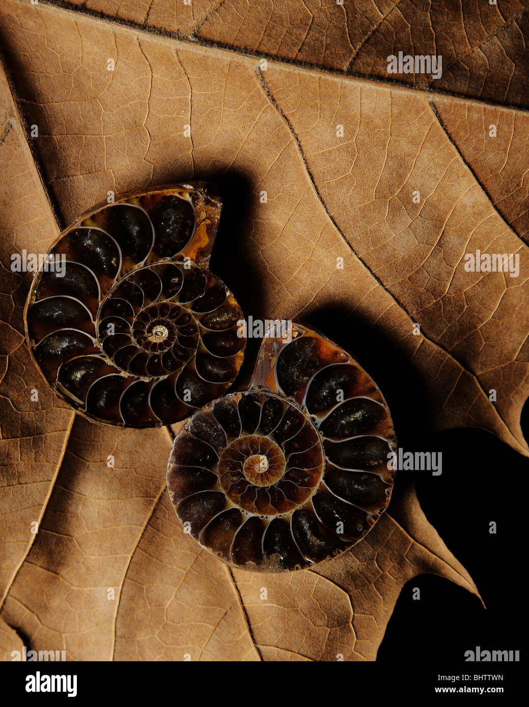 Stock photo of artistically arranged elements of nature. The articles are brown tones and consist of two spiral - Stock Image