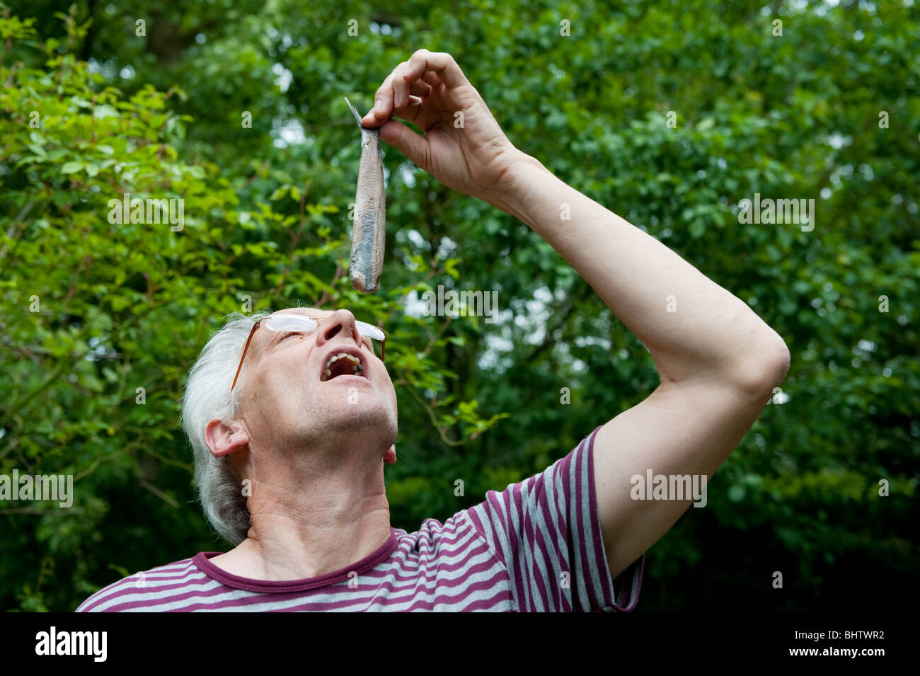 Dutch man is eating typical raw herring - Stock Image
