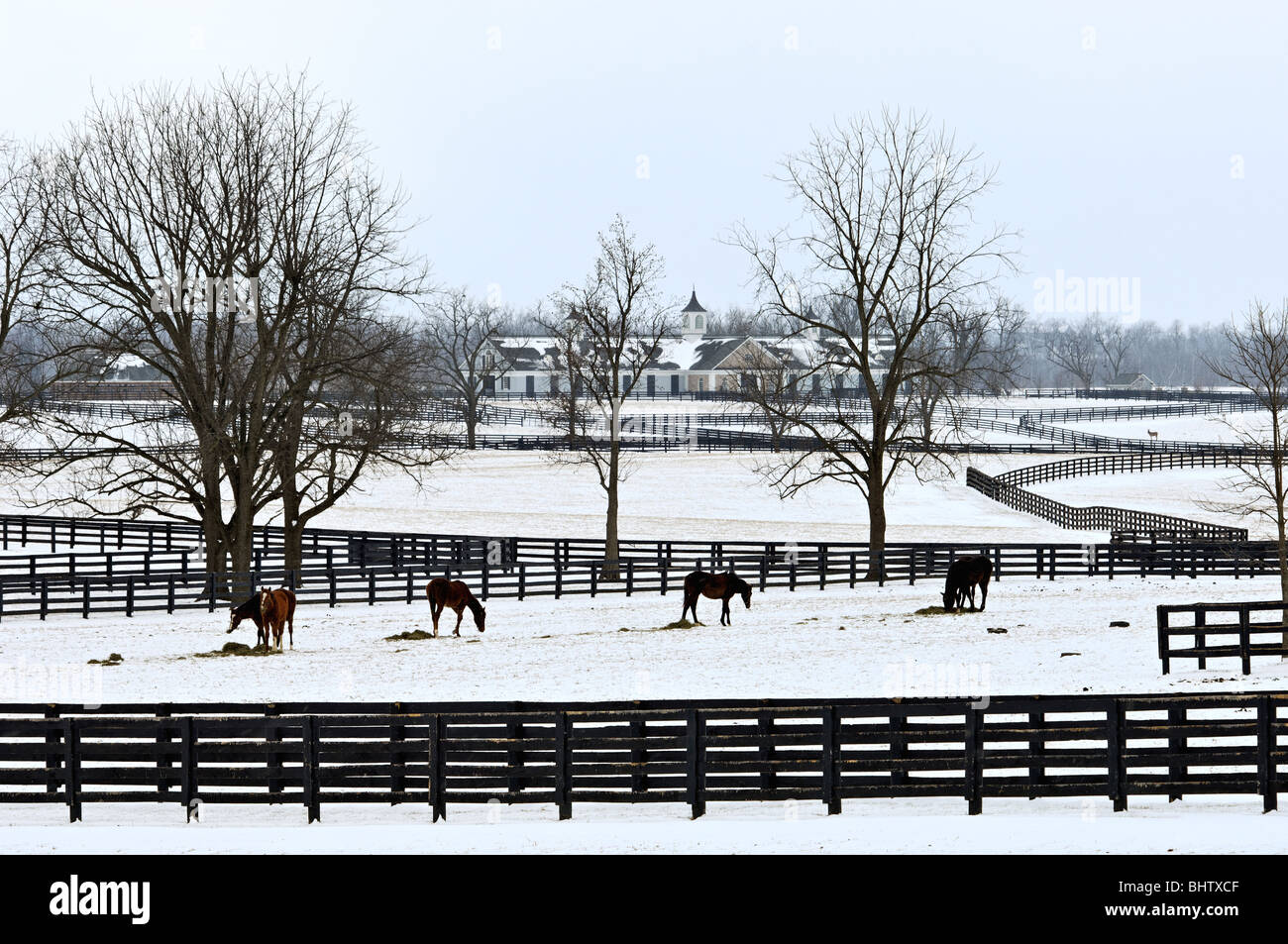 Thoroughbred Horses in Snow Covered Paddock in Woodford County, Kentucky - Stock Image