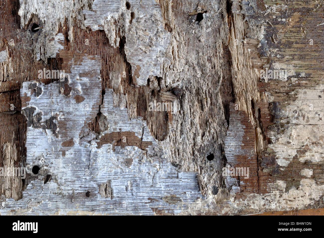 Wood Background - John Gollop - Stock Image