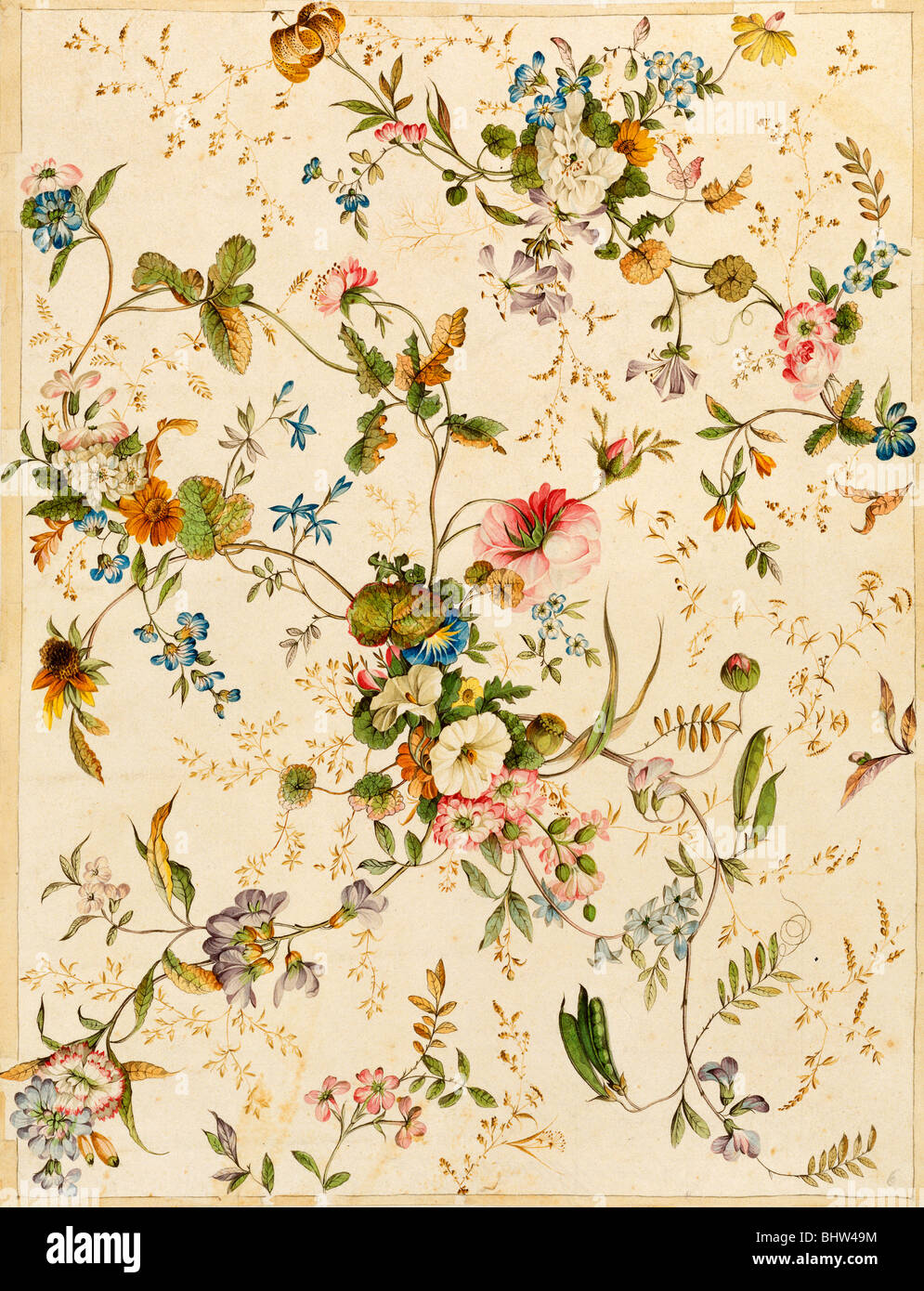 Design for Chintz, by William Kilburn. England, late 18th century - Stock Image