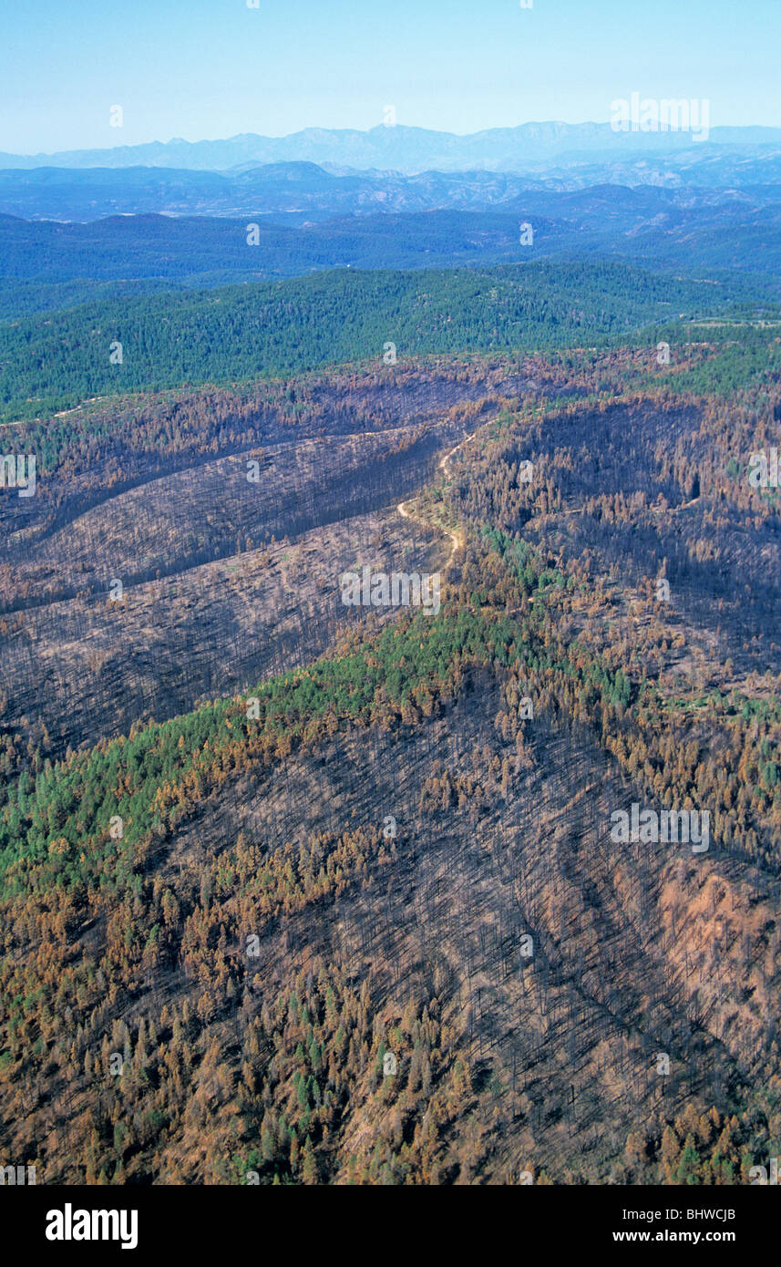 Aerial of aftermath of Rodeo-Chediski Forest Fire showing mosaic pattern of burn, Apache-Sitgreaves National Forest, - Stock Image