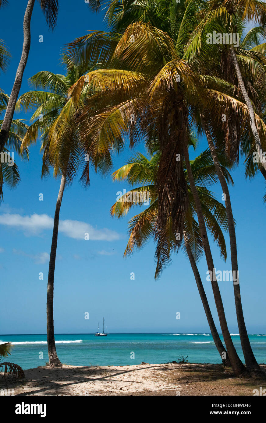 Distant boat moored off the Caribbean coast framed with palm trees Tobago West Indies. - Stock Image