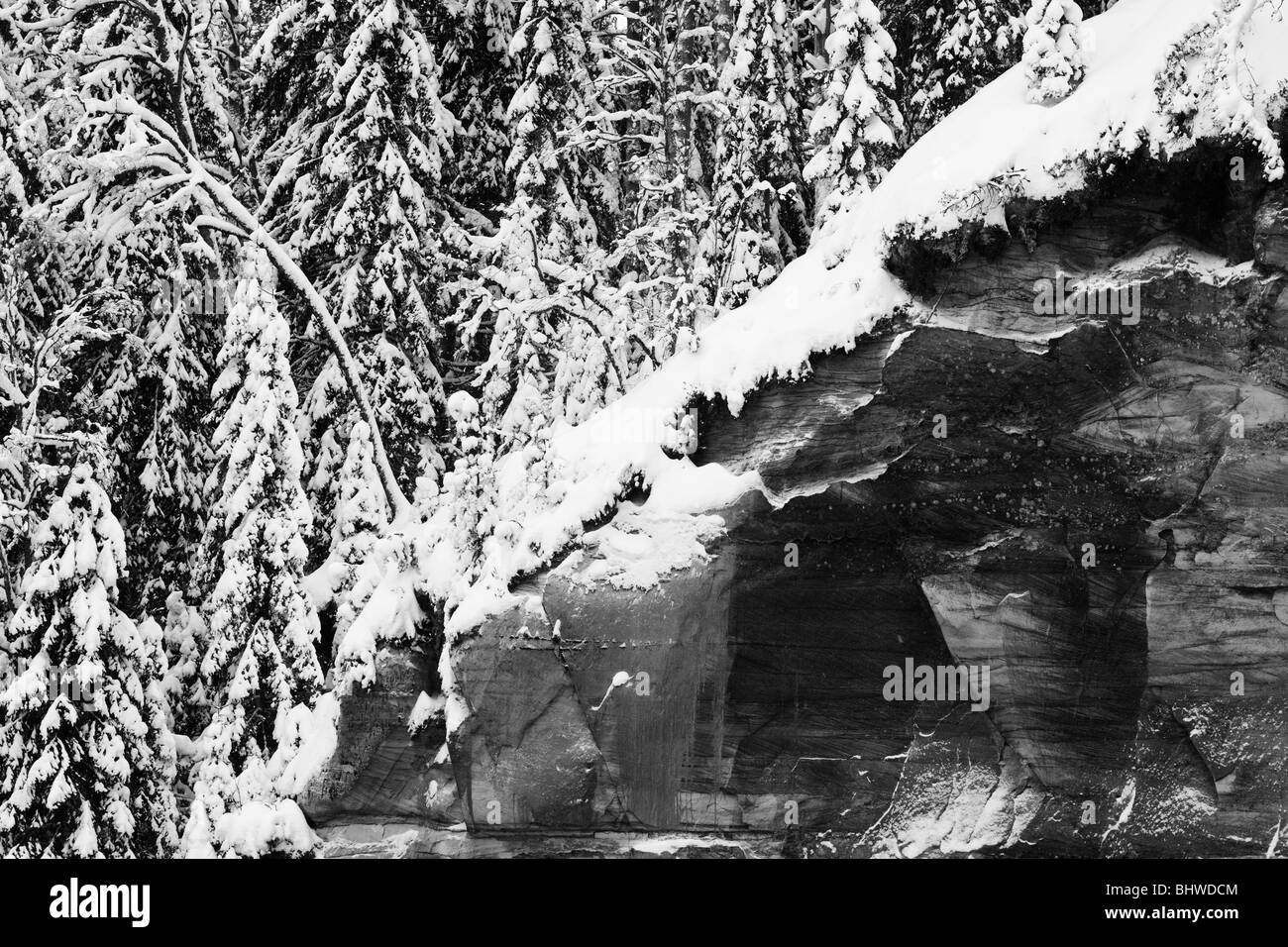Norway spruce woodland on sandstone cliff - Stock Image