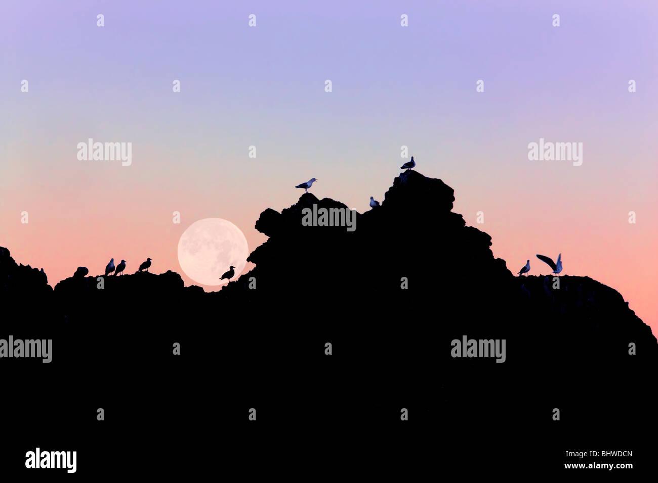 Full moon setting over rock at Bandon Beach with seagulls. Bandon, Oregon - Stock Image
