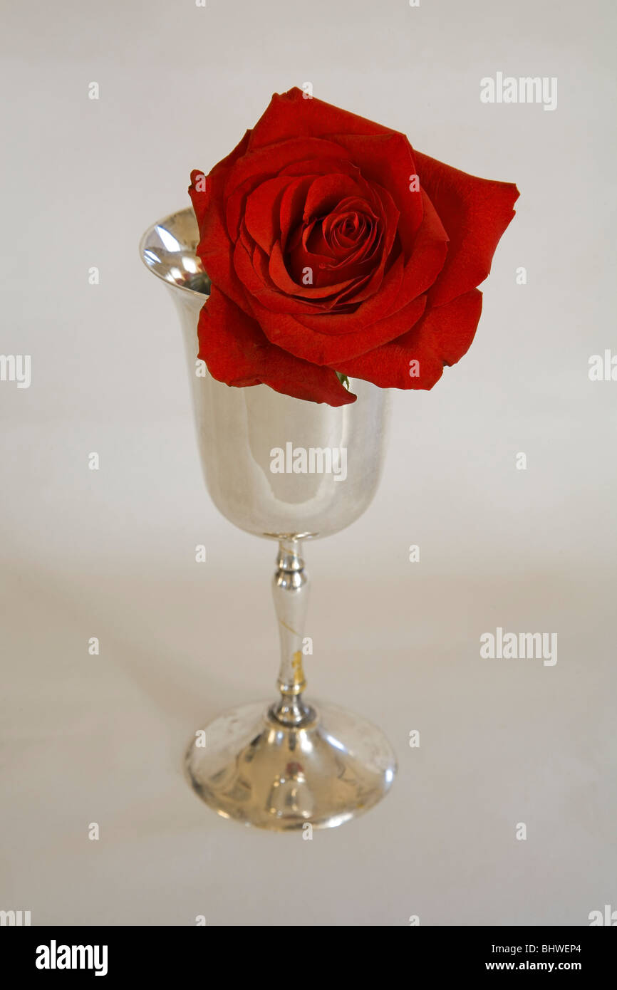 A red long stemmed rose in a silver chalice. - Stock Image
