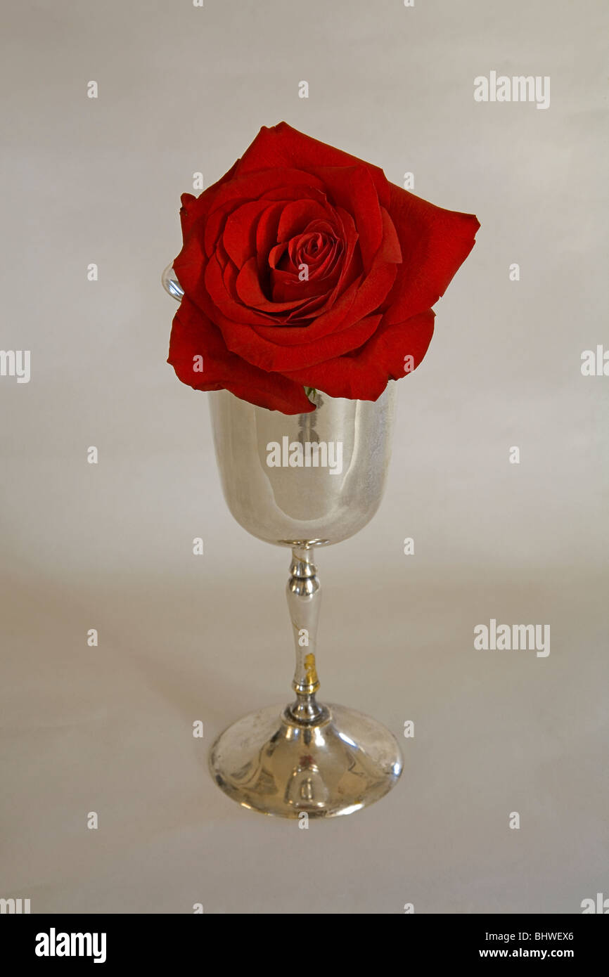 A long stemmed red rose in a silver chalice - Stock Image