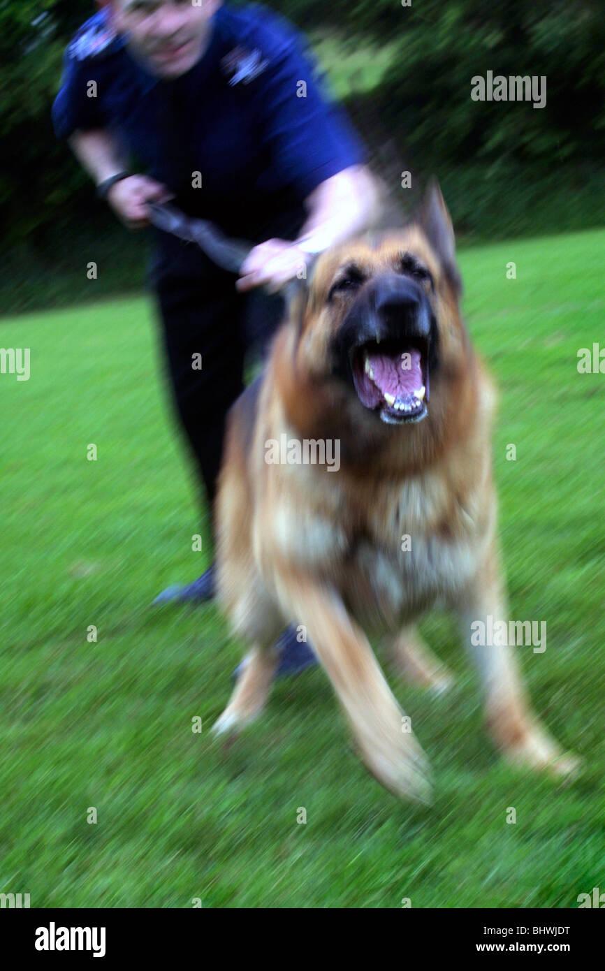 Dog Rescue Essex Southend