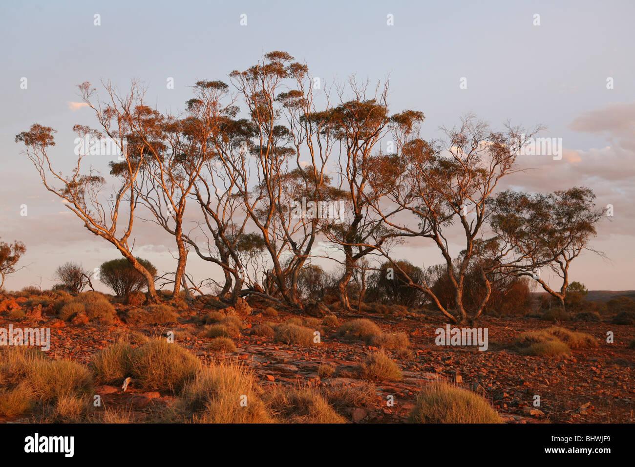 australasian nature photography 09 south australian museum