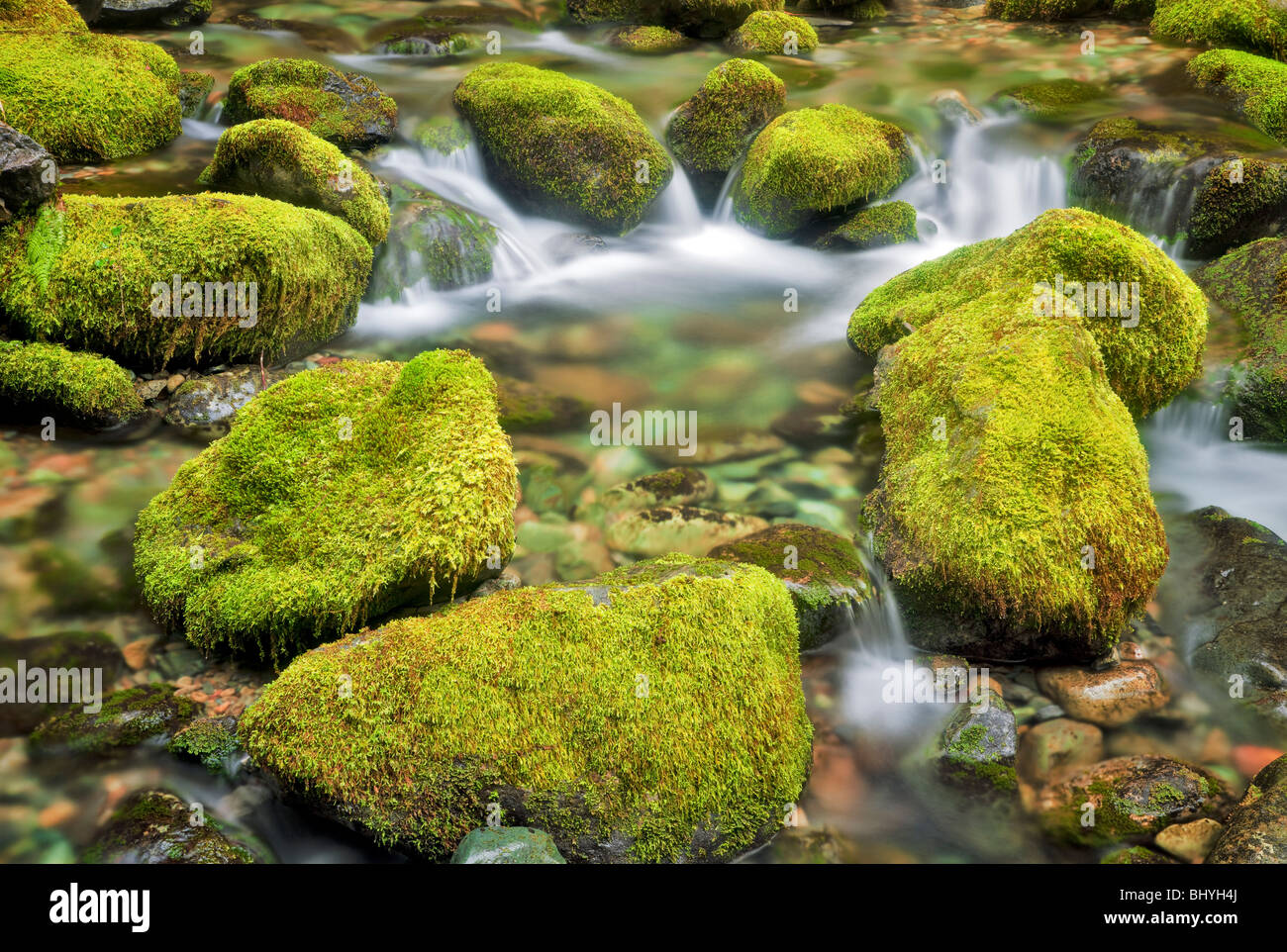 Moss covered rocks in small stream at Opal Creek Scenic Recreation Area, Oregon - Stock Image