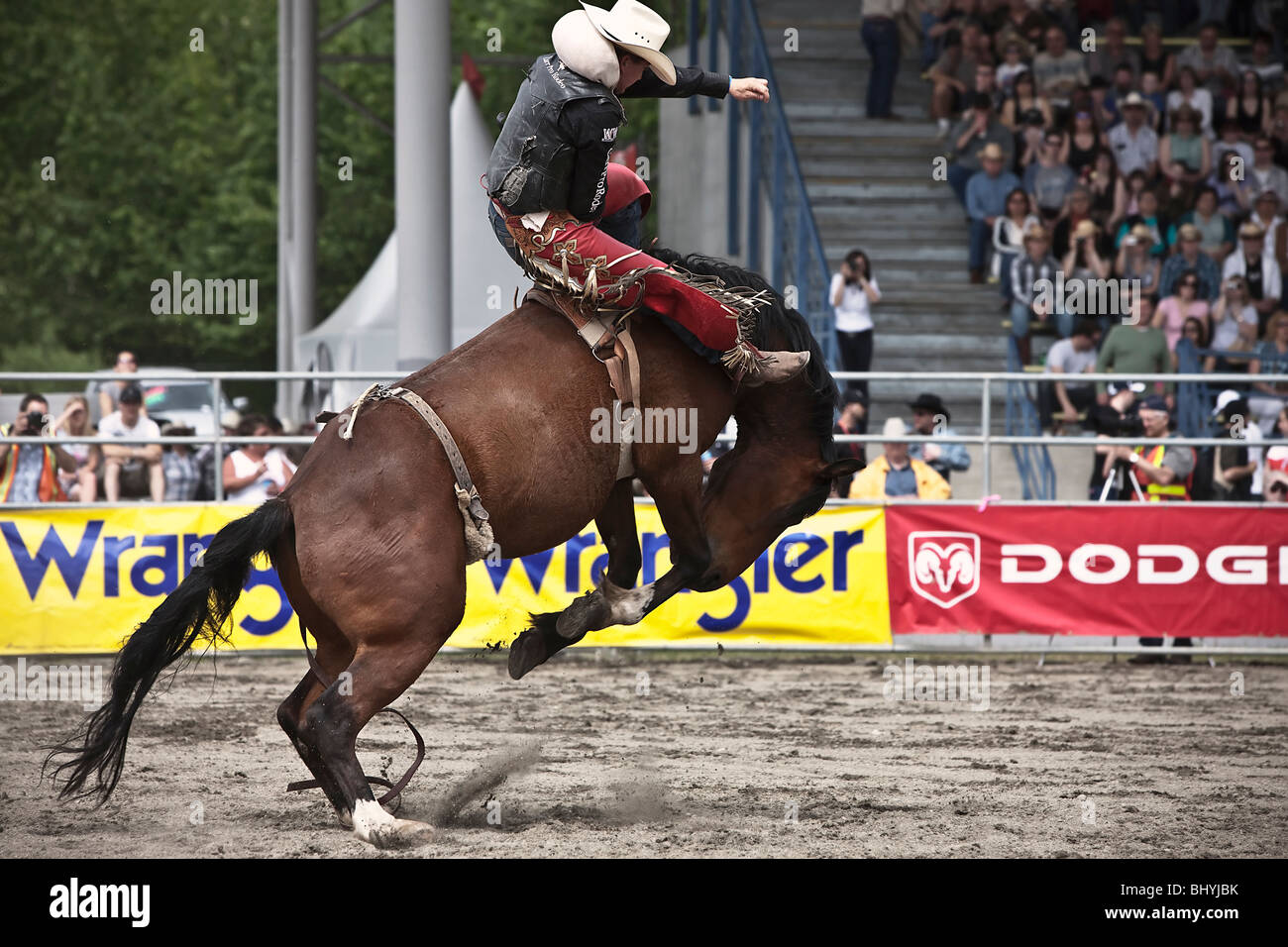 Cowboy riding a horses during Rodeo - Stock Image
