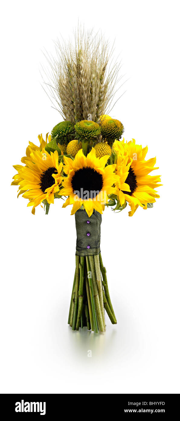 dramatic sunflower wheat late summer hand tied posy - Stock Image