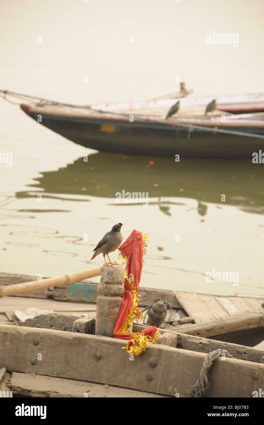 birds enjoy perching on the empty boats early morning in Varanasi - Stock Image