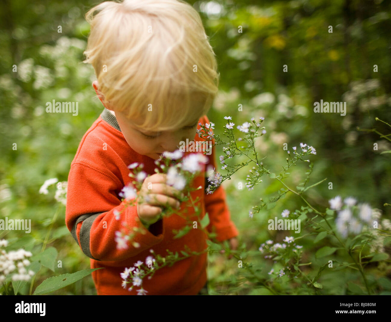 Young boy smelling wildflowers in the woods. - Stock Image