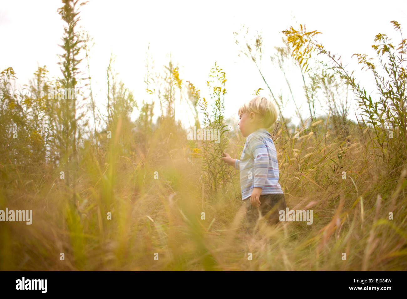 Young boy playing in a grassy field. - Stock Image